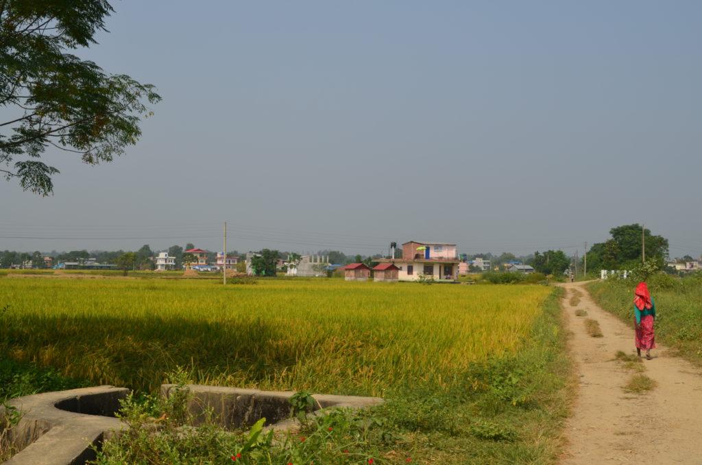 En chemin vers Chitwan