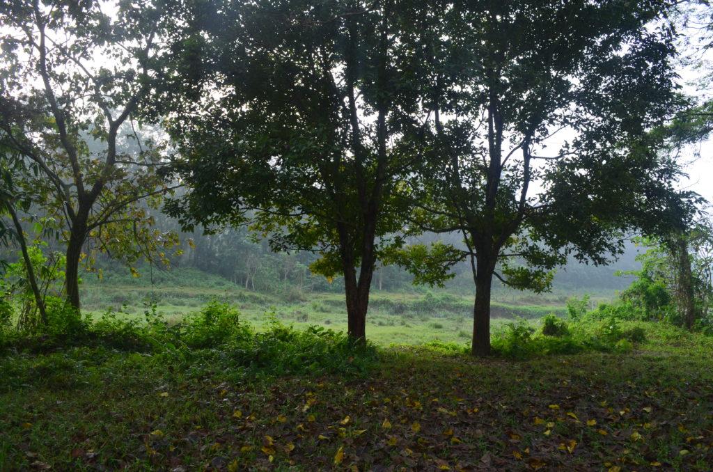 A l'orée de la jungle à Chitwan pour une incroyable aventure de 3 jours