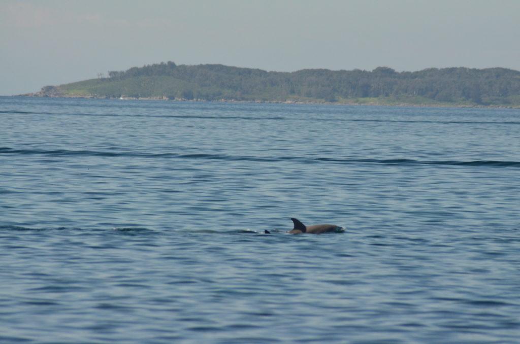 Dauphins Jervis Bay australie